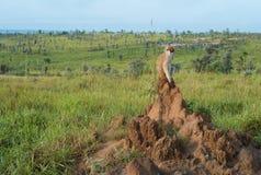 Małpi obsiadanie na mrówki wzgórzu zdjęcie royalty free
