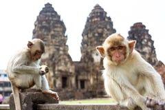 Małpi obsiadanie przed antyczną pagodową architekturą Wat Phra Rozwala Sam Yot świątynię, Lopburi, Tajlandia Zdjęcia Stock
