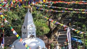Małpi odprowadzenie na górze Buddyjskiej stupy w Kathmandu, Nepal obrazy stock