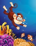 Małpi pikowanie pod oceanem royalty ilustracja