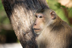 Małpi portret Obraz Stock