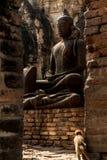 Małpi przyglądający statuy buddhism Zdjęcie Royalty Free