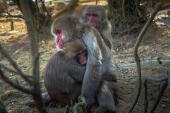 Małpi przytulenie zdjęcia stock
