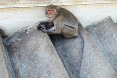 Małpi siedzący samotny Fotografia Royalty Free