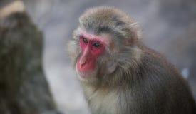 Małpi zoo Afryka ssaka zwierzę Fotografia Stock