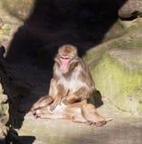 Małpi zoo Afryka ssaka zwierzę Zdjęcia Stock