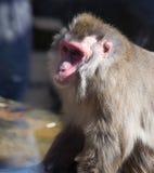 Małpi zoo Afryka ssaka zwierzę Zdjęcie Stock