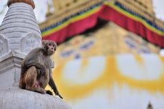 Małpia świątynia zdjęcia stock