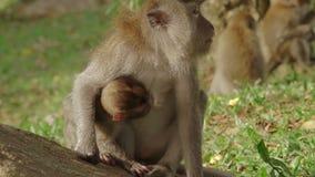 Małpia kobieta i jej dziecko swobodny ruch zbiory wideo