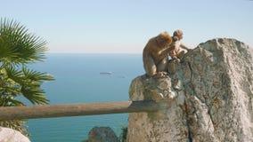 Małpia mama, swój dziecko z Gibraltar i statek na ich tle zbiory wideo