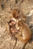 Małpia rodzina w szczęściu. Obrazy Royalty Free