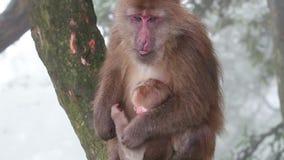 małpie dzieciątko zbiory wideo