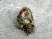 małpie dzieciątko Fotografia Royalty Free