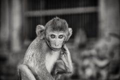 małpie dzieciątko fotografia stock