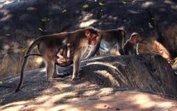 małpie dzieciątko zdjęcie royalty free