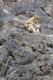 małpie miłość matki Fotografia Royalty Free
