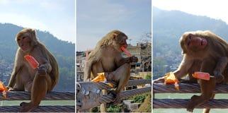 Małpiego lody Móżdżkowy mróz Fotografia Stock