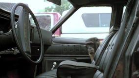 Małpiego otwarcia samochodowy drzwi i dostawać wewnątrz zdjęcie wideo