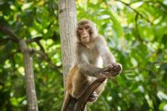 Małpuje na drzewie, Małpi Wspinaczkowy drzewo zdjęcie stock