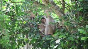 Małpuje na drzewie przy Pong Krathing Gorącą wiosną zbiory