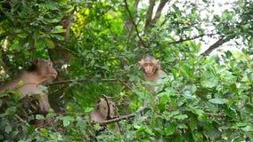 Małpuje na drzewie przy Pong Krathing Gorącą wiosną zbiory wideo