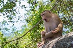 Małpuje na kamieniu w Tajlandia, Azja zdjęcie stock