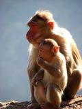 małpy Zdjęcia Stock
