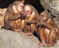 małpy zdjęcie royalty free