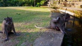 Małpy bawić się z each inny w parku zbiory