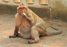 Małpy prawie wejście Khao Luang jama Fotografia Royalty Free