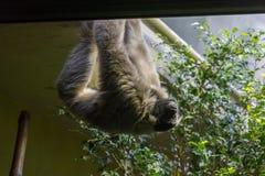 Małpy robią jaki małpy widzią zdjęcia royalty free