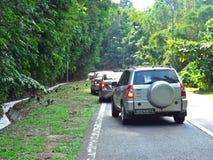 Małpy, samochody, las zdjęcie royalty free
