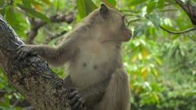 Małpy sztuka w drzewie zbiory wideo