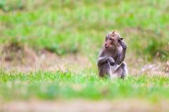 Małpy Tajlandia obrazy royalty free