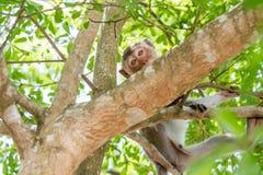 Małpy Tajlandia obraz royalty free