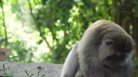 Małpy w lesie w Bali zdjęcie wideo