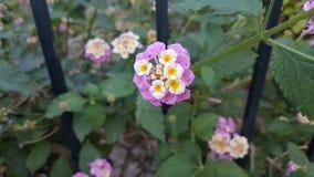 Mały śliczny kwiat Zdjęcie Stock