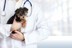 Mały śliczny pies egzamininujący przy weterynaryjną lekarką obrazy stock