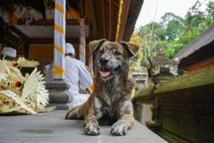 Mały śliczny pies jest relaksujący blisko Ubud Hinduskiej świątyni, Bali wyspa, Indonezja, Bali, Indonezja, 18 08 2018 zdjęcie royalty free