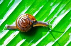 Mały ślimaczek Zdjęcie Stock