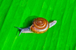 Mały ślimaczek Obraz Stock