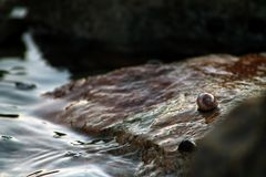Mały ślimaczek i ocean obrazy stock