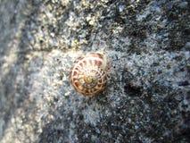 Mały ślimaczek na ścianie Fotografia Royalty Free