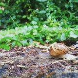 Mały ślimaczek na ziemi Obraz Stock