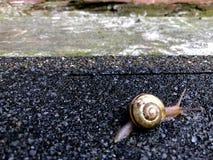 Mały ślimaczka skrzyżowanie zdjęcie stock