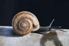 mały ślimak fotografia stock