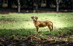 Mały śmieszny pies Zdjęcia Royalty Free
