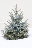 Mały świerkowy drzewo w zima krajobrazie Obraz Stock