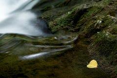 Mały żółty liść na bieżącej rzece w lesie Obrazy Royalty Free