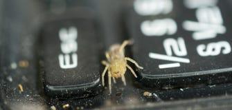 Mały żółty pająk na zakurzonej i brudnej laptop klawiaturze Zdjęcia Royalty Free